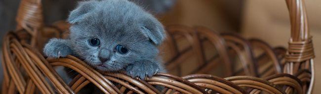 яке ім`я дати кошеняті