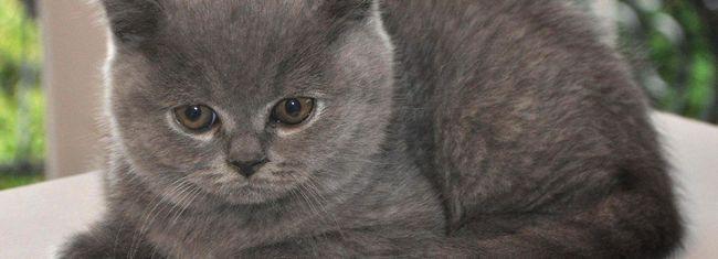 як назвати кошеня