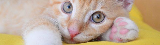 Як назвати кота: варіанти красивих, цікавих і веселих імен