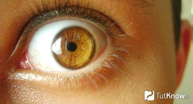 Світло-карі очі
