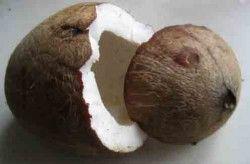 Як відкрити кокос