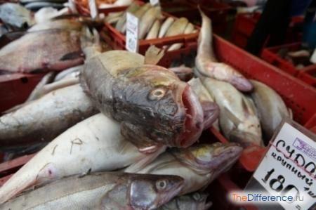 різниця між свіжої та несвіжої рибою