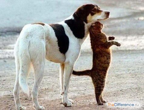 Як подружити кота і собаку?