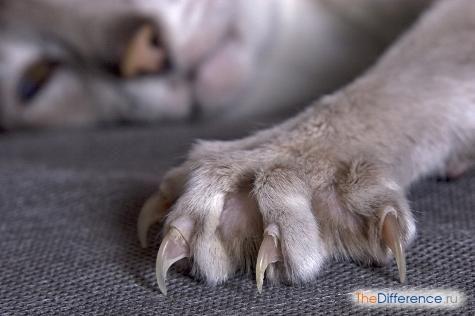 Як підстригти кігті кішці?