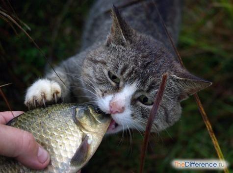 Як зрозуміти, що у кішки глисти?
