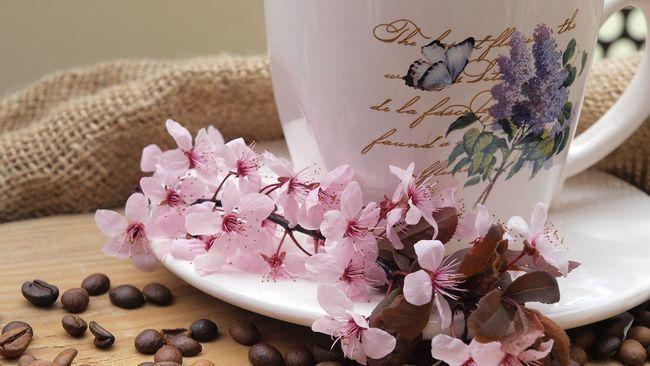 Як використовувати кави в якості добрива для квітів