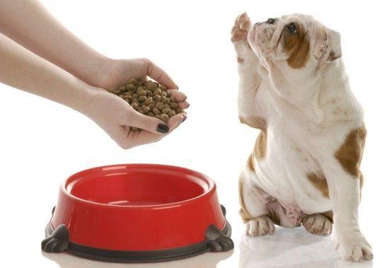 Як правильно годувати собаку?