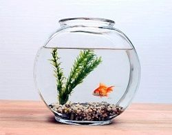 `акваріумна