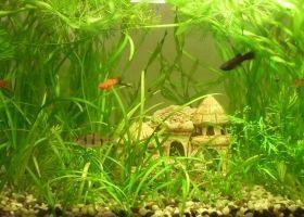 Як правильно вибрати рибок в акваріум?
