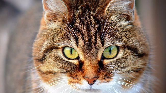 Як вибрати корм для кішок