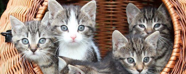Як привчати кошеня до когтеточке, зберігши меблі і шпалери без подряпин