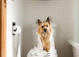 Як привчити собаку до туалету на вулиці?