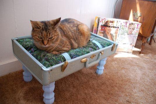 Цього кота цілком влаштовує будинок, зроблений зі старого валізи