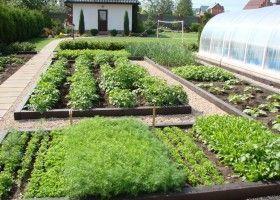 Як зробити красиві грядки і оформити город?