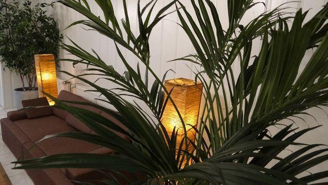 Як вибрати кімнатну рослину