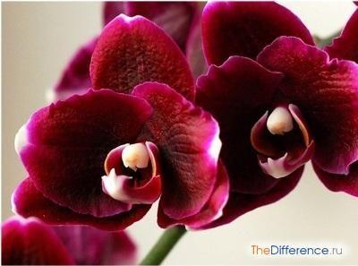 Як доглядати за орхідеєю в горщику