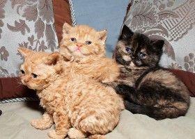 Як доглядати за тілом кішки? Відео
