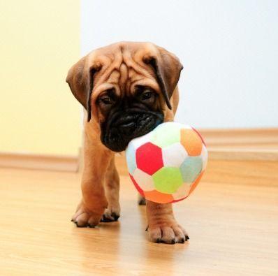 Як виховати собаку