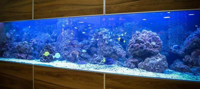aquarium-427948_1920