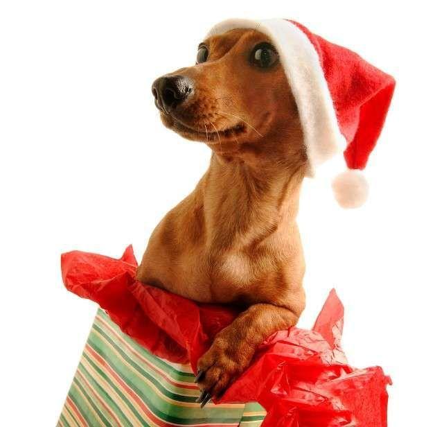giftdog.JPG