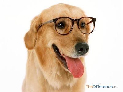 Як вибрати собаку
