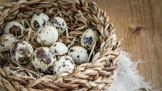 Як правильно варити перепелині яйця