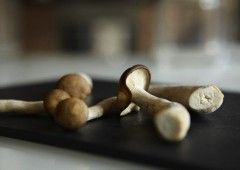 Як виростити гриби вдома?