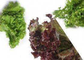 Як виростити листяний салат?