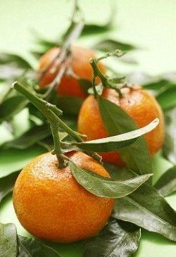 Як виростити мандарин в домашніх умовах