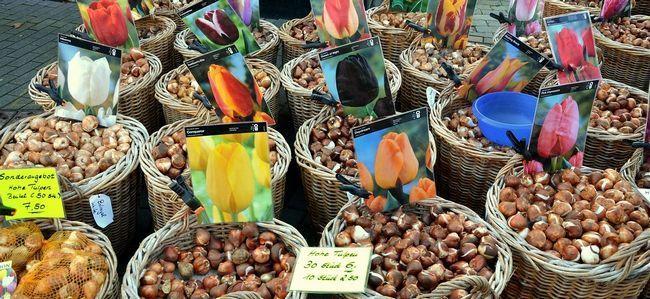 flower-bulbs-494399_1280