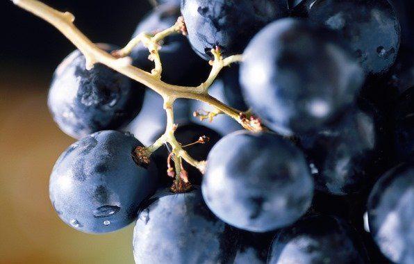 Виноград будинку