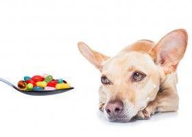 Які вітаміни необхідні собакам?
