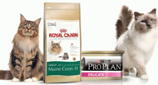 Яким кормом краще годувати кішку - поради ветеринарів?