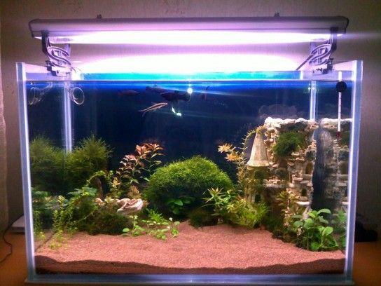 Вибір грунту для домашнього акваріума