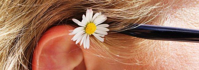 daisy-504491_1280