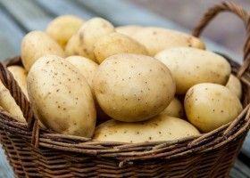 Картопля при дієті: користь і шкода