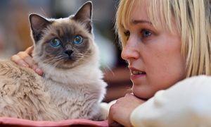 Домашній вихованець кішка - що потрібно знати