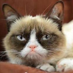 Кішки дізнаються голос своїх господарів, але вважають за краще ігнорувати