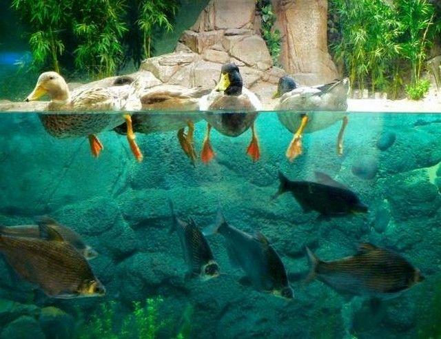 akvariumw11.jpg