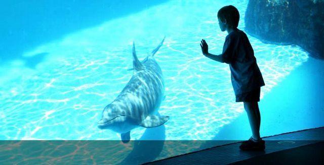 akvariumw20.jpg
