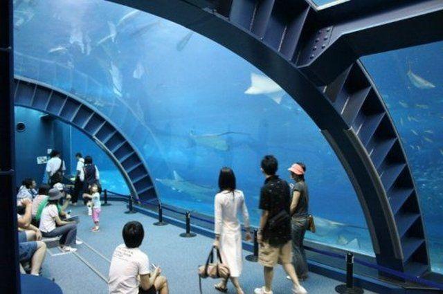 akvariumw2.jpg