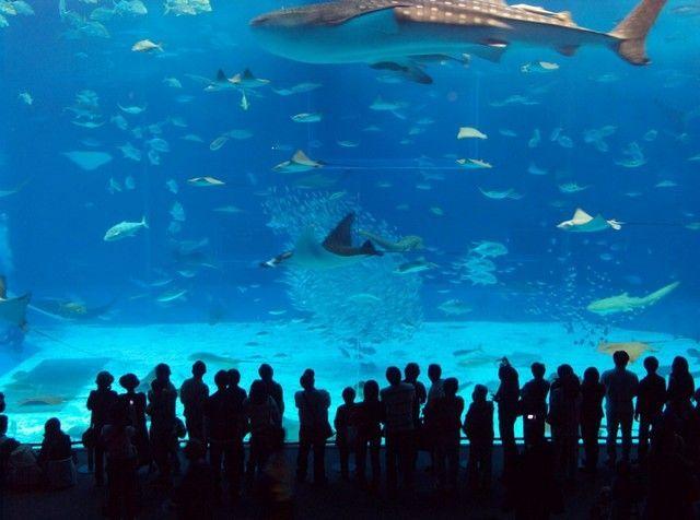 akvariumw23.jpg