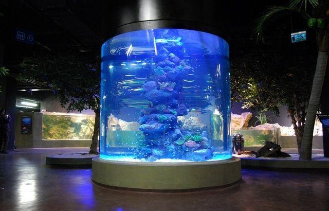 akvariumw25.jpg