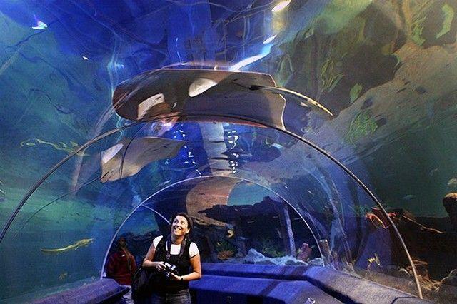 akvariumw26.jpg