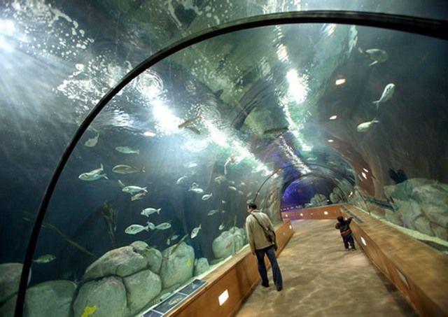 akvariumw28.jpg
