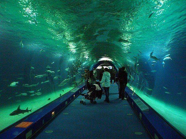 akvariumw29.jpg