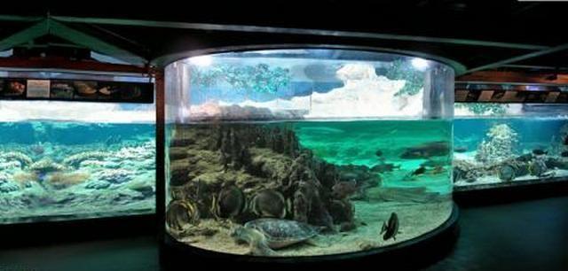 akvariumw3.jpg