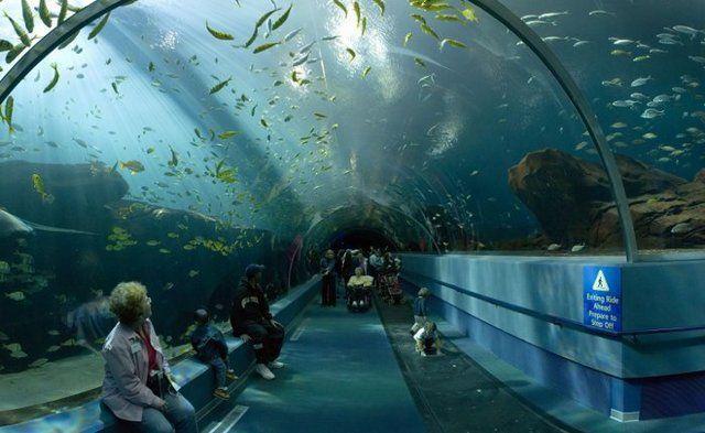 akvariumw32.jpg