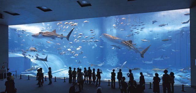 akvariumw33.jpg