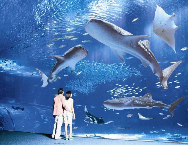 akvariumw36.jpg